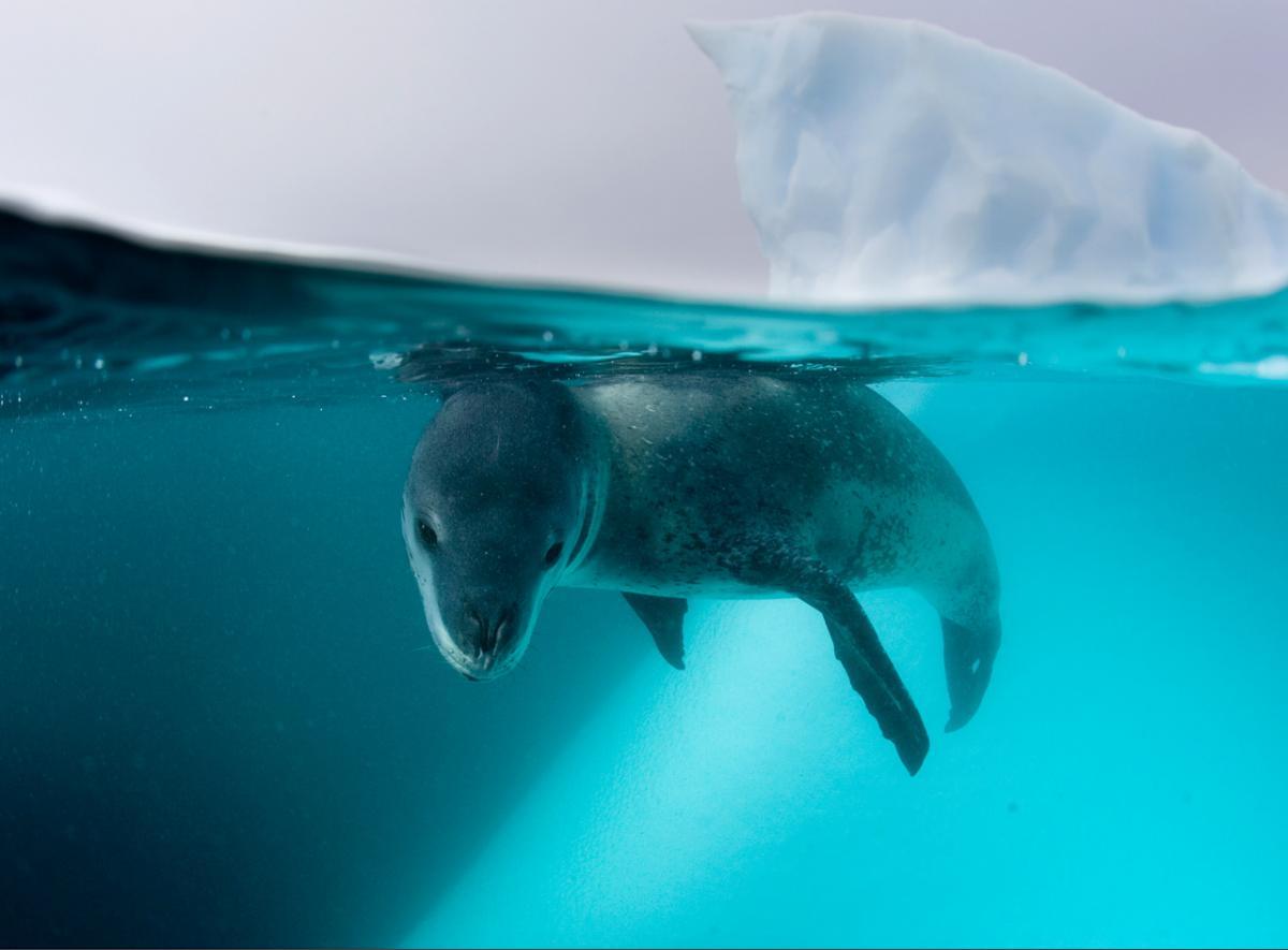 动物海象图片大全大图